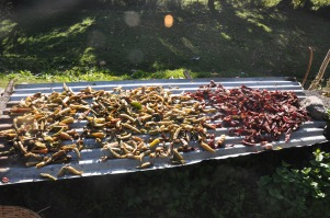 white and Red chillies, drying in the sun